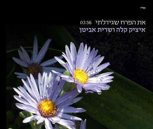 איציק קלה ושרית אביטן – את הפרח שגידלתי